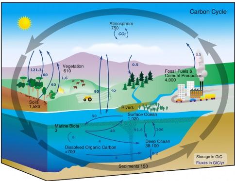 Ngành Khoa học môi trường