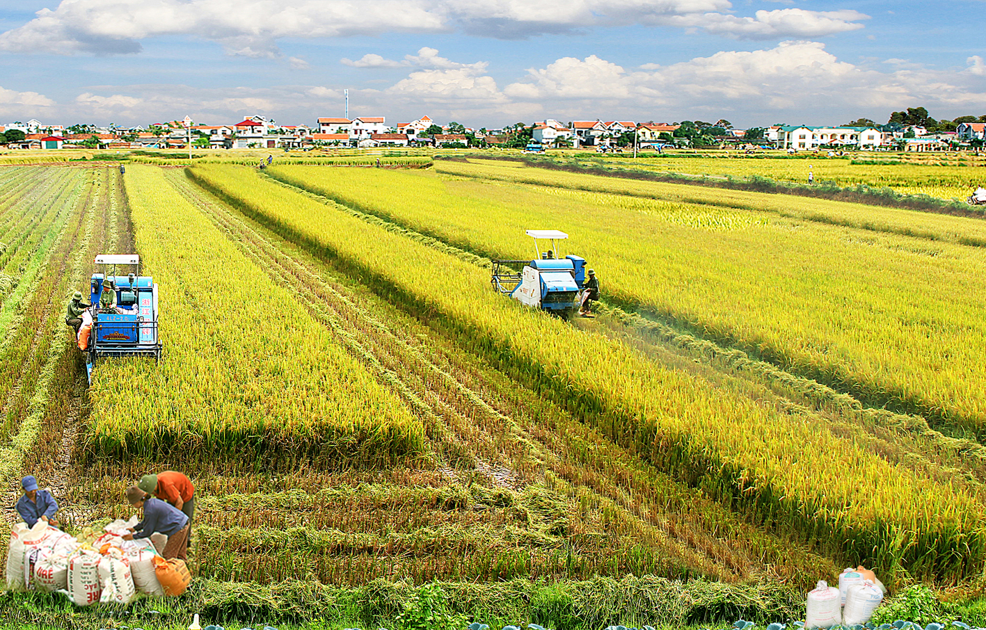 Ngành Phát triển nông thôn